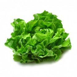 Foto Lechuga roble verde ecológica (1 unidad)