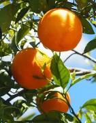Comprar frutas frescas y ecológicas, cultivo propio y proximidad