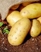 Comprar verduras y hortalizas frescas y ecológicas cultivo propio y proximidad