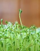 Comprar legumbres ecológicas cultivo propio y proximidad